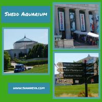 Adventures to the Shedd Aquarium