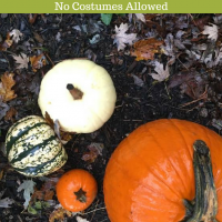 No Costumes Allowed: Halloween Cancelled